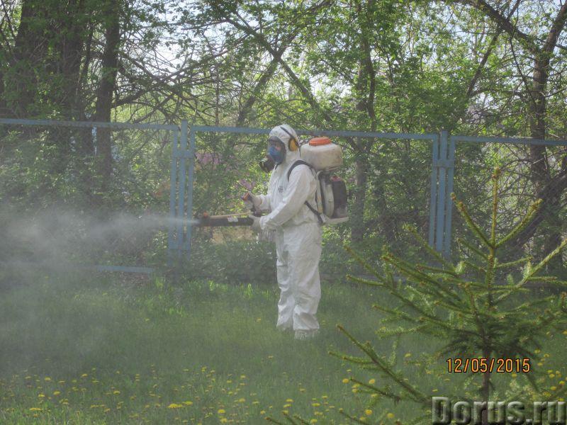 Санобработка от насекомых, грызунов, дезинфекция - Уборка и дератизация - Санитарная обработка жилых..., фото 3