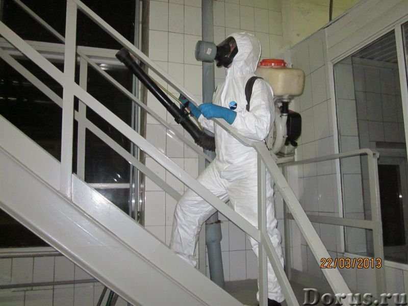 Санобработка от насекомых, грызунов, дезинфекция - Уборка и дератизация - Санитарная обработка жилых..., фото 4